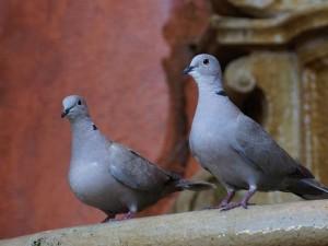 Gołębie Jak Je Odstraszyć Z Balkonu Porady Domowe Polkipl