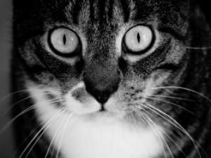 Ailurofobia i ailurofilia - co to takiego?