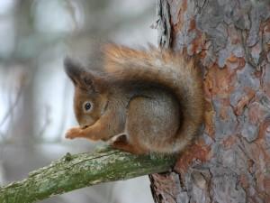Bajeczka o chorej wiewiórce