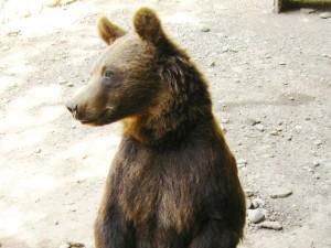 Bajeczka o niesfornym niedźwiadku