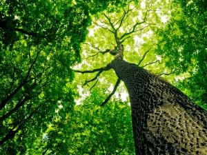 Bajka o drzewie