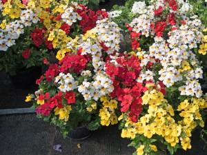 Balkon cały w kwiatach