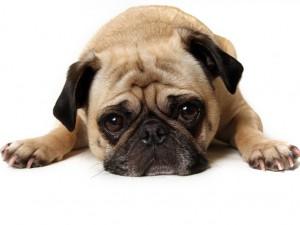 Biegunka u psa - co robić?