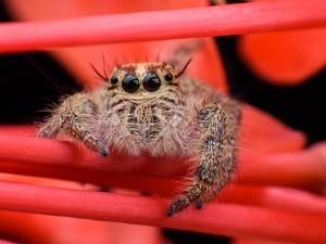 Boisz się pająków? Naukowcy odkryli dlaczego!