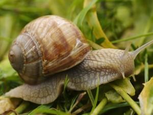 Chcesz wytępić ślimaki? Poznaj ekologiczne sposoby, które pomogą ci się ich pozbyć