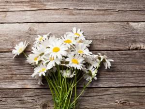 Choć niepozorny, to prawdziwa gwiazda wśród roślin leczniczych! Jak wykorzystać rumianek dla zdrowia?