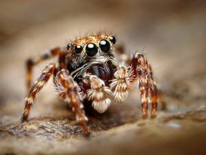 Czy bać się ich ugryzień? 8 faktów o polskich pająkach