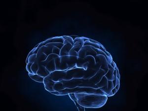 Czy mózg ma płeć?