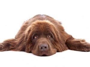Czy wiesz jak leczyć przeziębienie u psa?