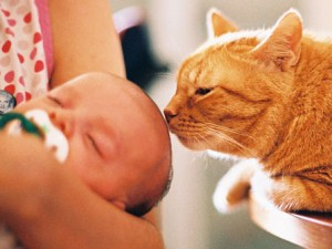 Czy wiesz jak przyzwyczaić kota do niemowlęcia?
