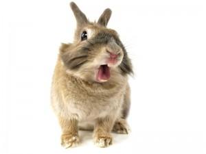 Czy wiesz jak rozpoznać grzybicę u królika?