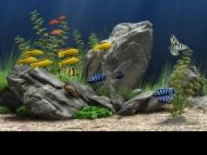 Czy wiesz jaką twardość powinna mieć woda w akwarium?