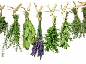 Czy zioła leczą raka