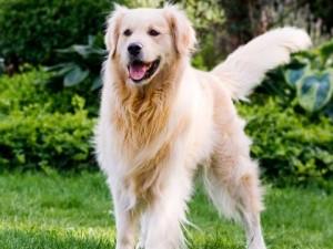 http://polki.pl/foto/4_3_SMALL/dogoterapia-gdy-pies-jest-terapeuta-1559030.jpg