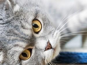 Domowe DIY: Jak zrobić drapak dla kota?