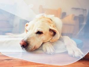 Dostała płatny urlop, by zaopiekować się chorym psem. Jak to możliwe?