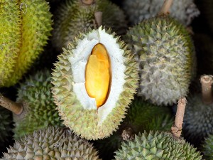 Durian to najsmaczniejszy, najdroższy i najniebezpieczniejszy spośród tropikalnych owoców