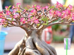 egzotyczne rośliny do domu, jakie nietypowe rośliny hodować