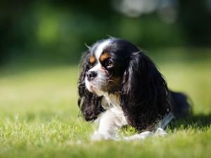 Szukasz Imienia Dla Psa Przejrzyj Nasz Katalog Psich Imion
