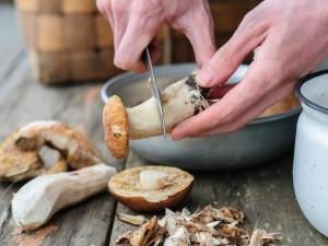 Jak oczyścić grzyby? Zacznij pierwsze sortowanie już w lesie!