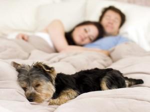 Jak się opiekować chorym psem?