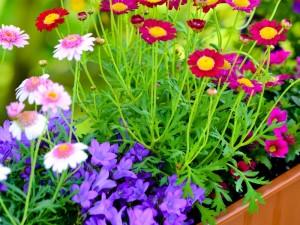 Kompozycje Kwiatowe Na Balkon Jak Je Aranżować Porady Domowe