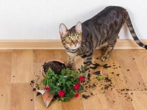 Kot z rozbitym kwiatkiem