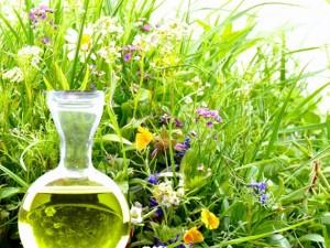 Jakie zioła zregenerują organizm po zimie?