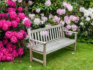 Krzewy ozdobne mają wiele zalet. Wybierz najbardziej odpowiednie do swojego ogrodu i posadź jeszcze w tym sezonie!