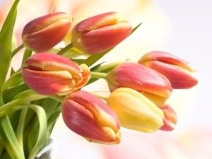 Kto powinien wręczyć kwiaty