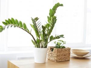 Kwiaty Doniczkowe Zielone Do Małych Mieszkań Do Dużych Salonów