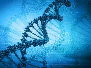 Mistrzowskie geny