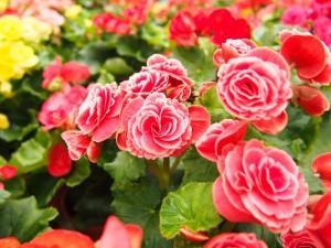Jakie Kwiaty Do Dużej Donicy Ogrodowej Poradnik Porady Domowe