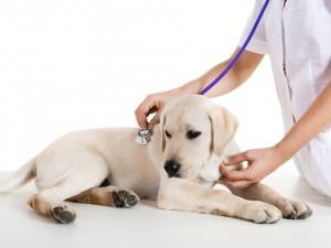 Niepokojące objawy u psa - na co koniecznie trzeba zwrócić uwagę?