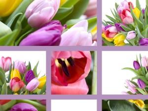 Obdarowywanie kwiatami
