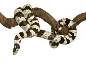 Ofidiofobia – jak pokonać strach przed wężami?