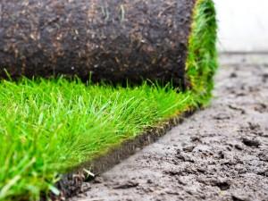 Piękny trawnik w jeden dzień? Tak, jeśli postawisz na trawę z rolki!