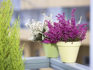 Pokaż nam zdjęcie swojego ogrodu i wygraj nagrody. Lista laureatów konkursu!