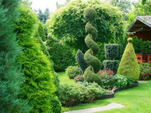 Posadź krzewy ozdobne liściaste. Uatrakcyjnią twój ogród!