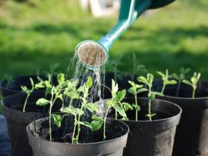 Powstają nowe naturalne pestycydy