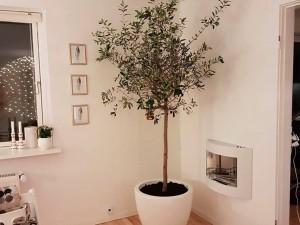 Poznajcie najmodniejszą roślinę doniczkową roku! Dzięki niej w każdym mieszkaniu można poczuć się jak... w Toskanii