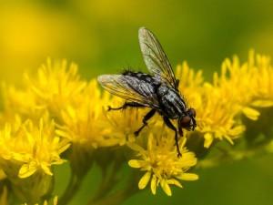 Są metody odstraszania much bez chemii. Sprawdź, co zrobić, by muchy trzymały się z daleka od twojego mieszkania