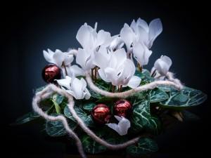 To najpiękniejsze dekoracje na Boże Narodzenie! Są niczym bajkowe miniogrody w środku zimy