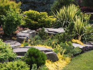 Trawa pampasowa - najpiękniejsza z traw. Możesz ją mieć w swoim ogrodzie!