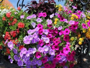 Wschodni balkon w kwiatach i pnączach