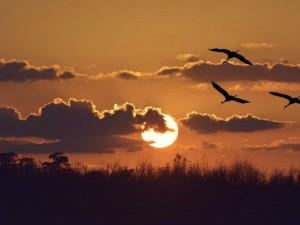 Wschody i zachody Słońca w 2016 roku