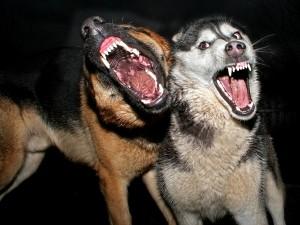 Wścieklizna – co robić, gdy podejrzewamy zakażenie?