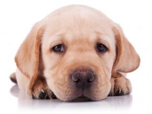 Wychowanie znalezionego szczeniaka – kilka wskazówek na start