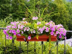 Wyhoduj zioła na balkonie!