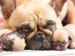Zaskakujące wyniki badań: właściciele psów robią im więcej zdjęć, niż...
